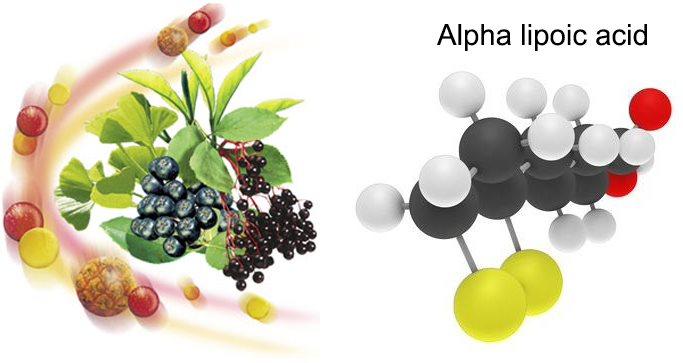 Alpha lipoic acid là chất chống oxy hóa bảo vệ mắt hiệu quả